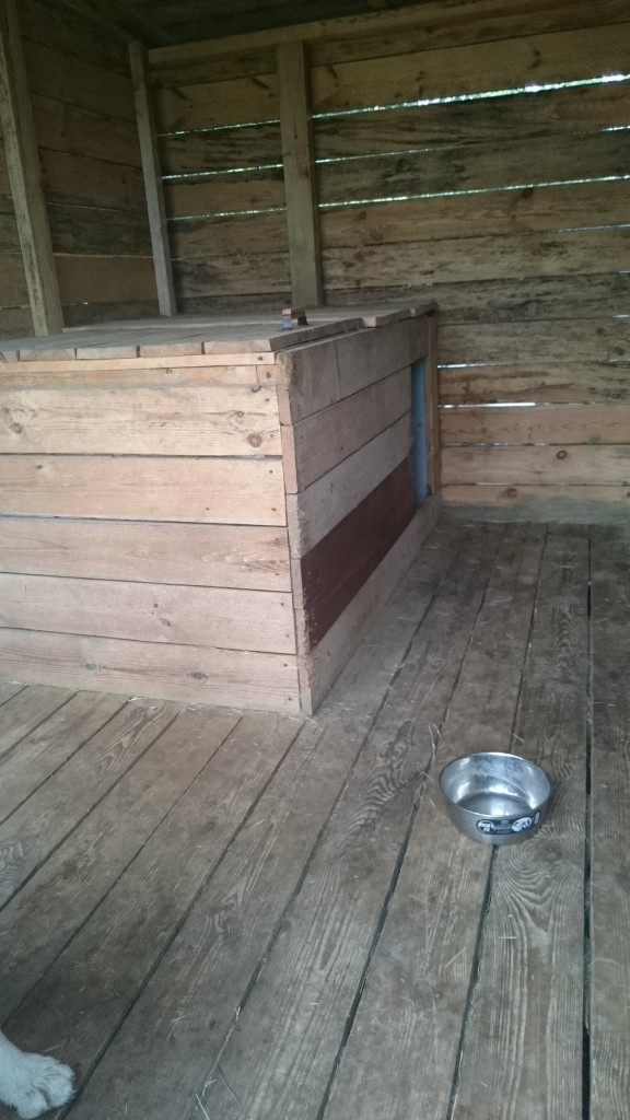 Передержка собак в Ногинске от питомника Фон Аргус-Хаус