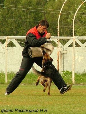 Yala Zoterhund