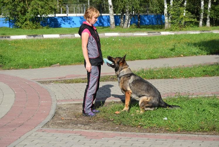 Восточноевропейская овчарка Продаются щенки ВЕО