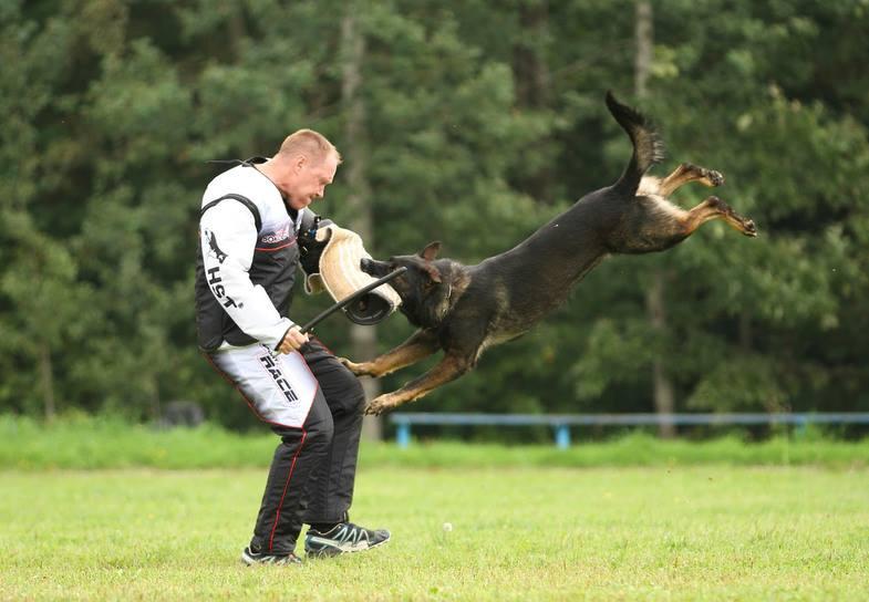 Купить щенка немецкой овчарки в московской области