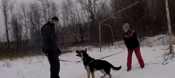 Тренинг собак питомника fon ARGUS HAUS