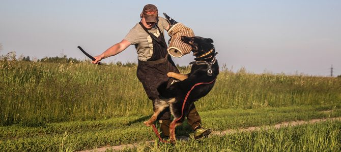 Собаки питомника «фон Аргус-Хаус», молодое поколение