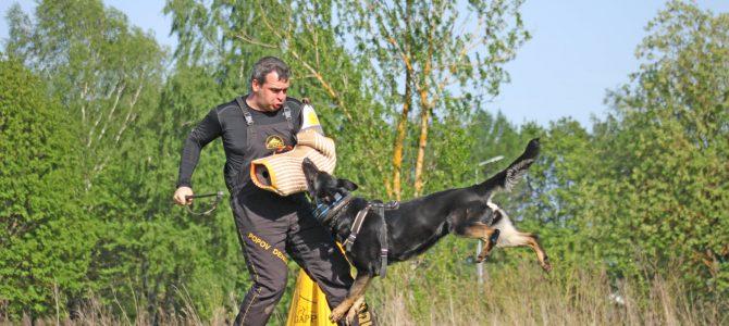 Великолепная работа по защите нашей лучшей производительницы Quadra z Klidkova dvora!!!!!!!!!!!!!!!